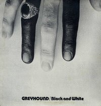 GREYHOUNDS-black & white